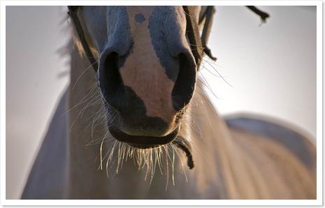 Pferde_am_Morgen3