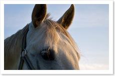 Pferde_am_Morgen4