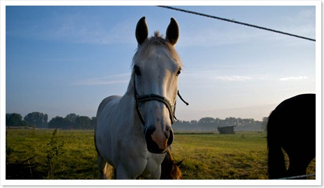 Pferde_am_Morgen5