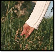 Gras_Hand