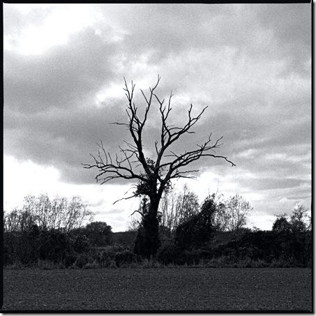 Baum_Heimweg