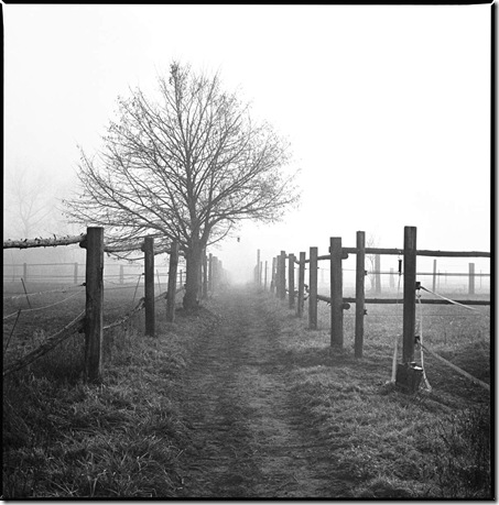 Nebel_2