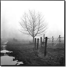 Nebel_5